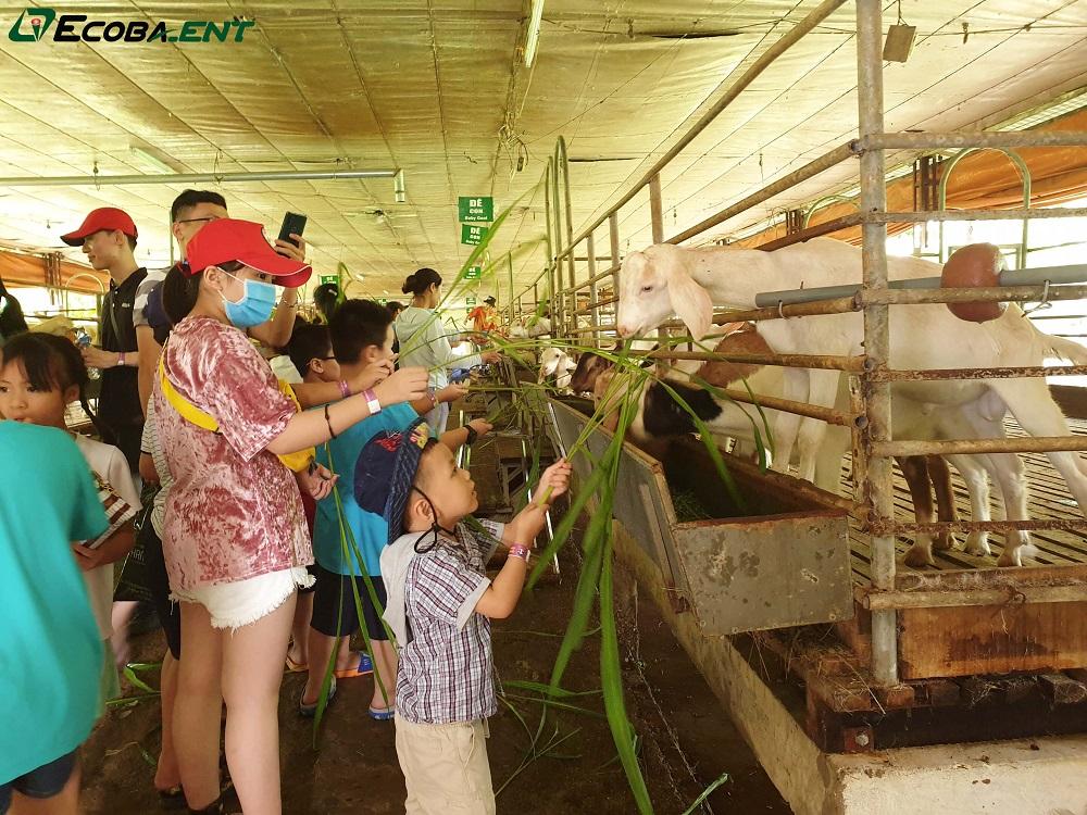 <p>Trải nghiệm nông trại đáng nhớ của các bạn nhỏ Ecoba ENT nhân dịp 1/6</p>